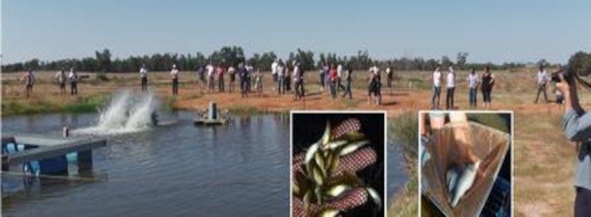 Field Day Attendants viewing Murray Cod at Silverwater Native Fish